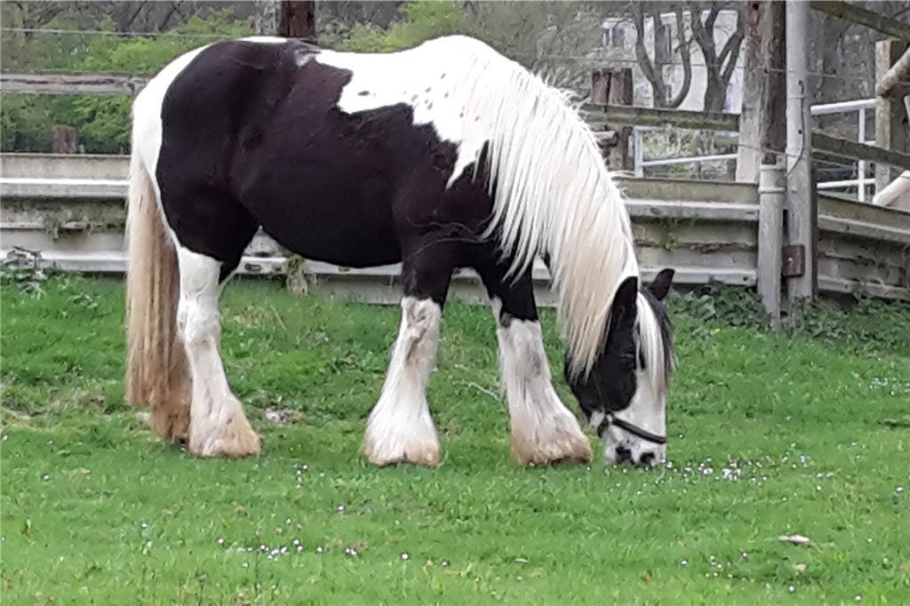 Unfall Mit Pferd