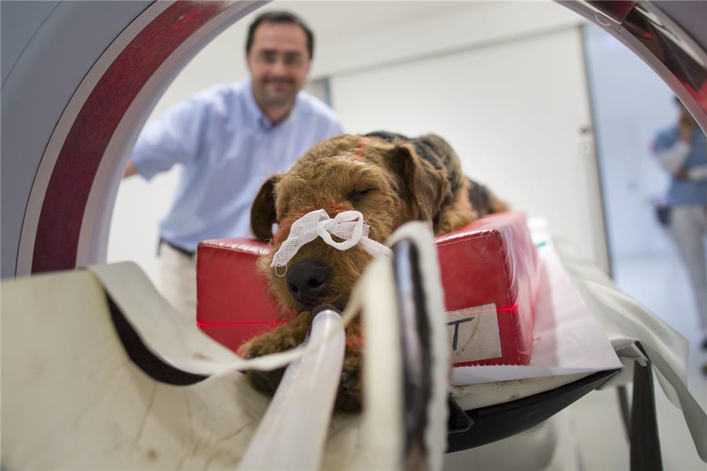 Der Tierärztliche Notdienst In Der Region Bröckelt