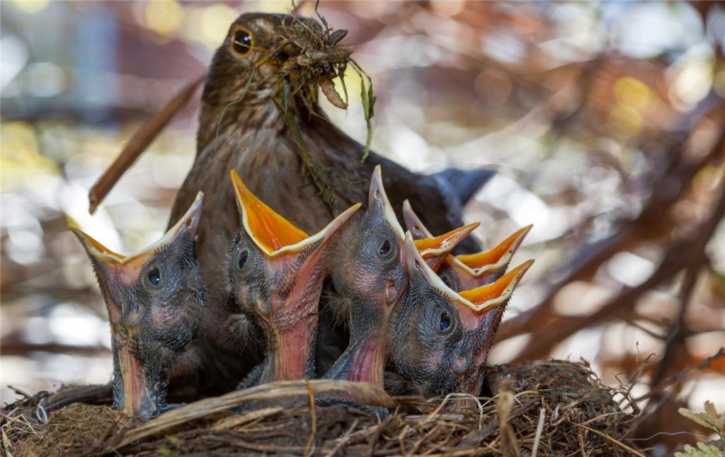 Verwunderung über Weniger Singvögel Im Garten